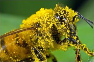 Dr Staffan Lindgren: Pollinators in your Garden – Not just bees