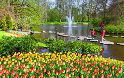 Sept. 2019: Roger Griffiths: The Channel Islands and the Keukenhof Gardens