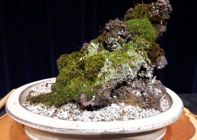 Lichens and moss on Pumice