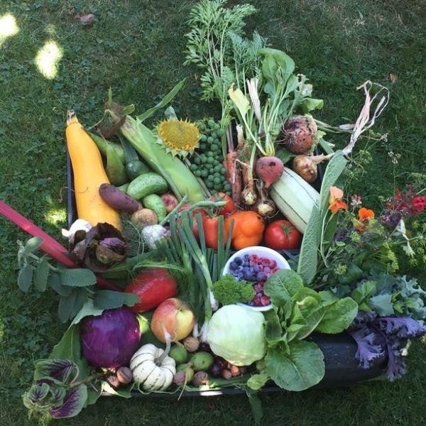Summer 2020 'Garden Edibles' Contest Winners