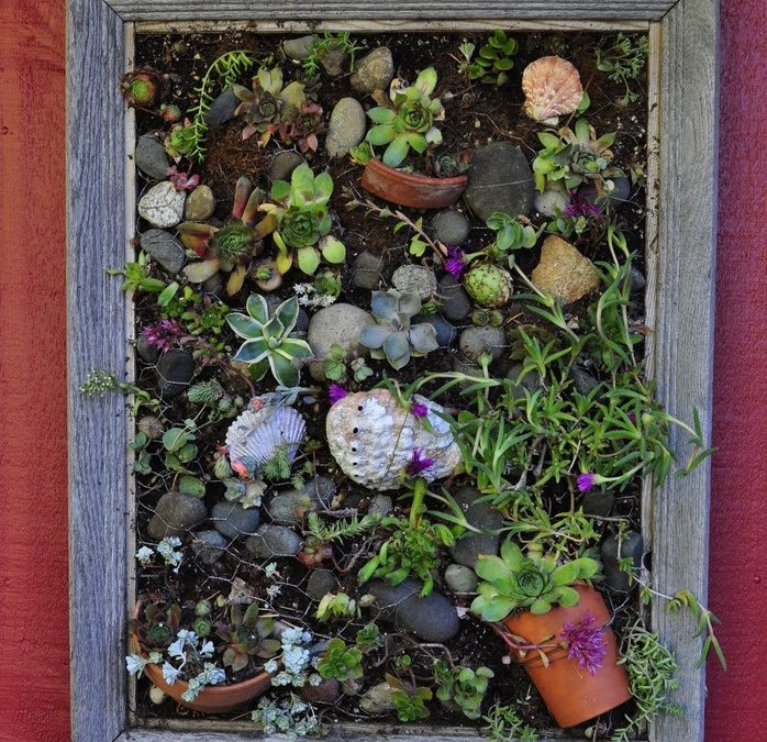 Summer 2020 'Container Gardens' Contest Winners