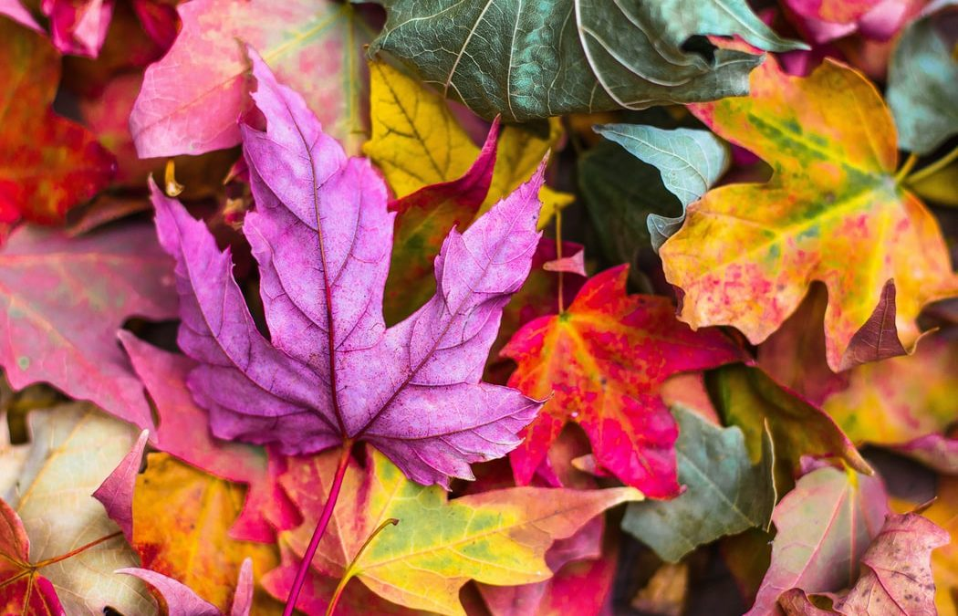Fallen Leaves – How to Use Fall's Bounty